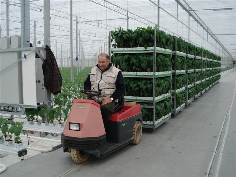 planten-800x600